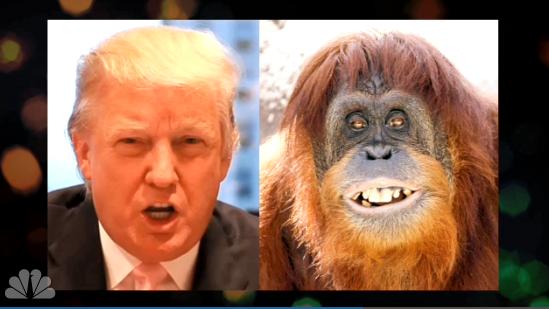 trum-orangutan