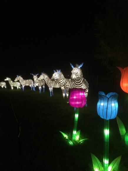 china-lights-11-5-16-jpg-4